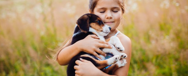 Cuidados gerais cachorros e gatos