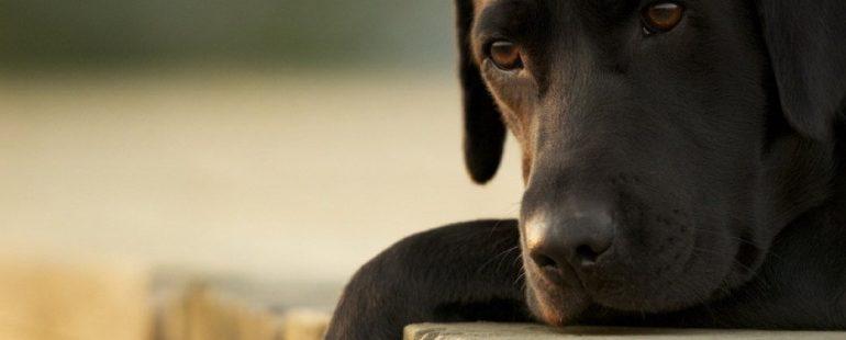 Cachorro não quer comer destaque