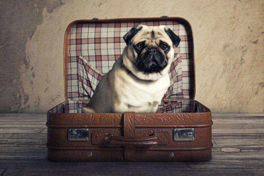 Serviço de hotel para cachorros