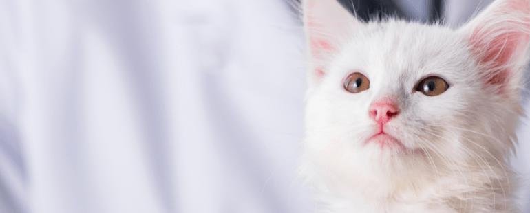 Doença do gato