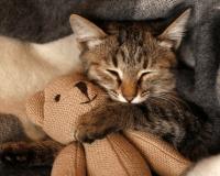 Sugestões de brinquedos para gatos
