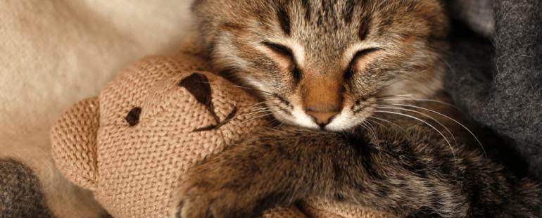 brinquedos para gatos