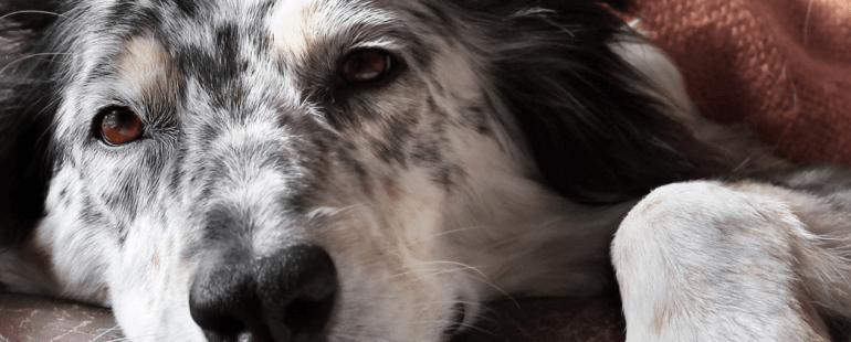 Cachorro com Diarreia: saiba o que fazer