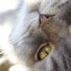 Quanto tempo dura o cio do gato e o que fazer