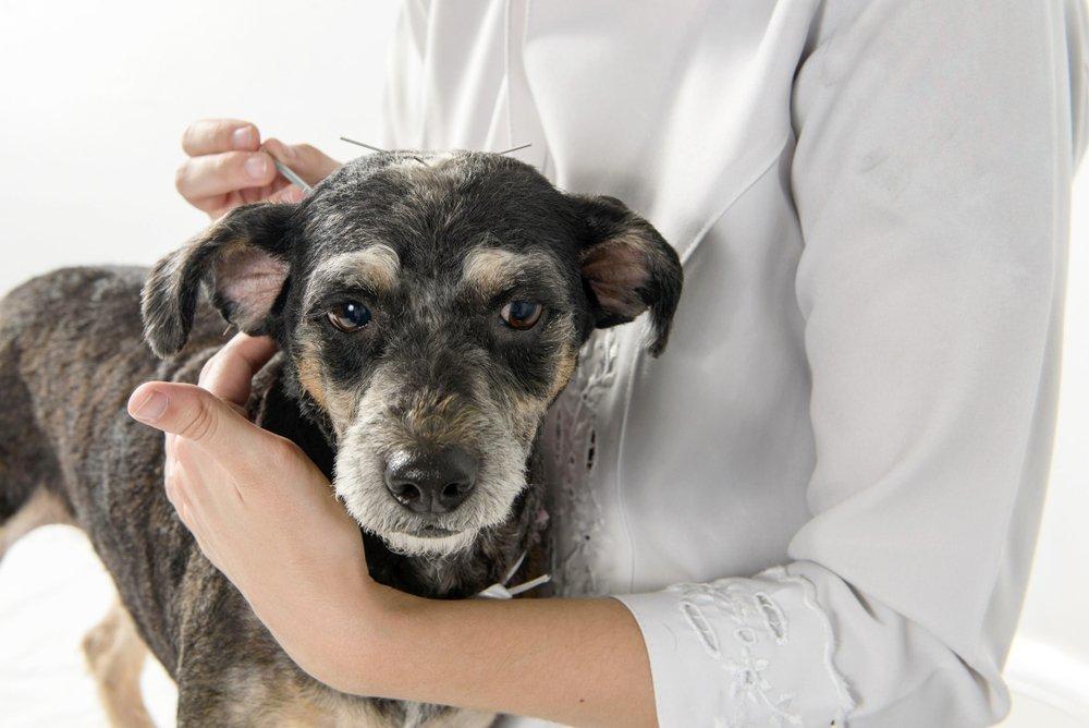 terapias veterinárias e tratamentos alternativos