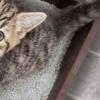 Gato urinando pela casa: como resolver