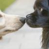 Cruzar cachorro: 7 dicas essenciais