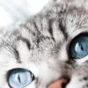 Como adestrar um gato: Comandos simples