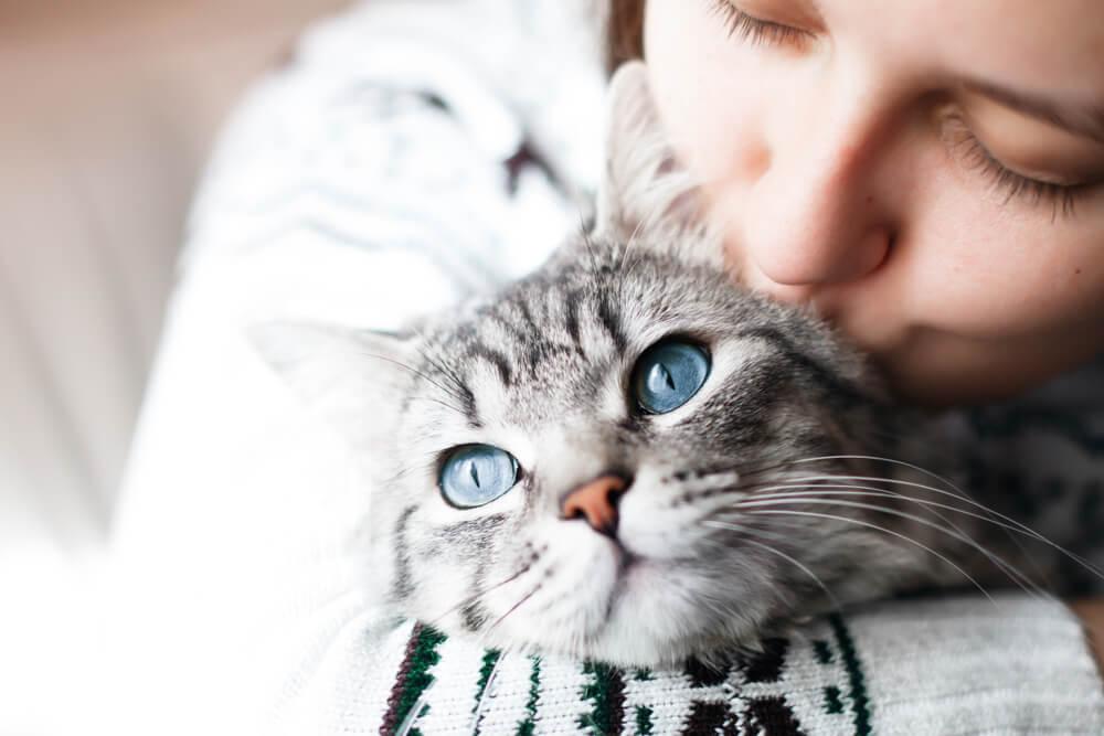 como-adestrar-um-gato