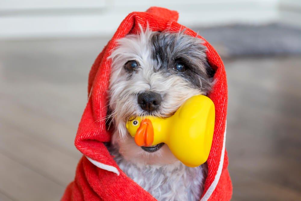 banho e tosa em clinica veterinária