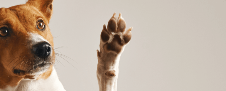 cachorro comendo fezes: o que fazer?