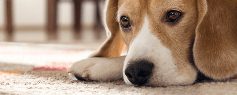 deixar o cachorro sozinho no fim de semana: o que fazer?