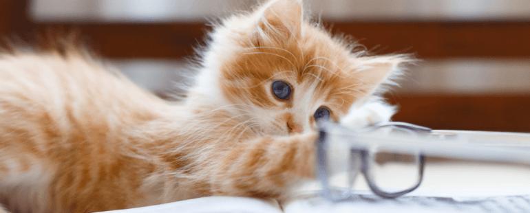 gatos filhotes - destaque