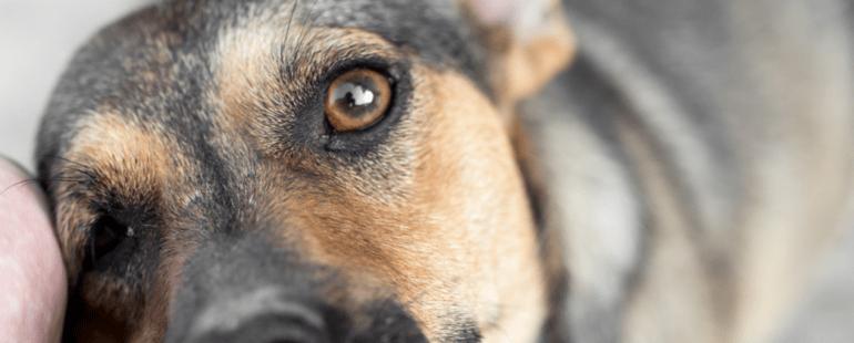 adocao de cachorro destaque