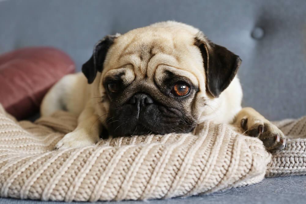 como saber se o cachorro esta triste