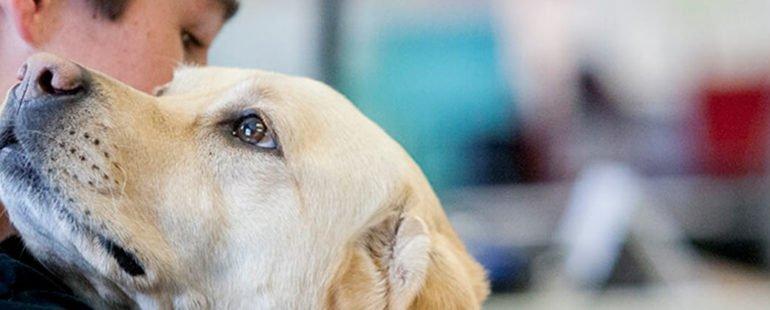 como saber se o cachorro ama o dono destaque