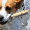 Cachorros de porte médio: tudo que você precisa saber