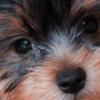 Cachorros de porte pequeno: tudo que você precisa saber sobre