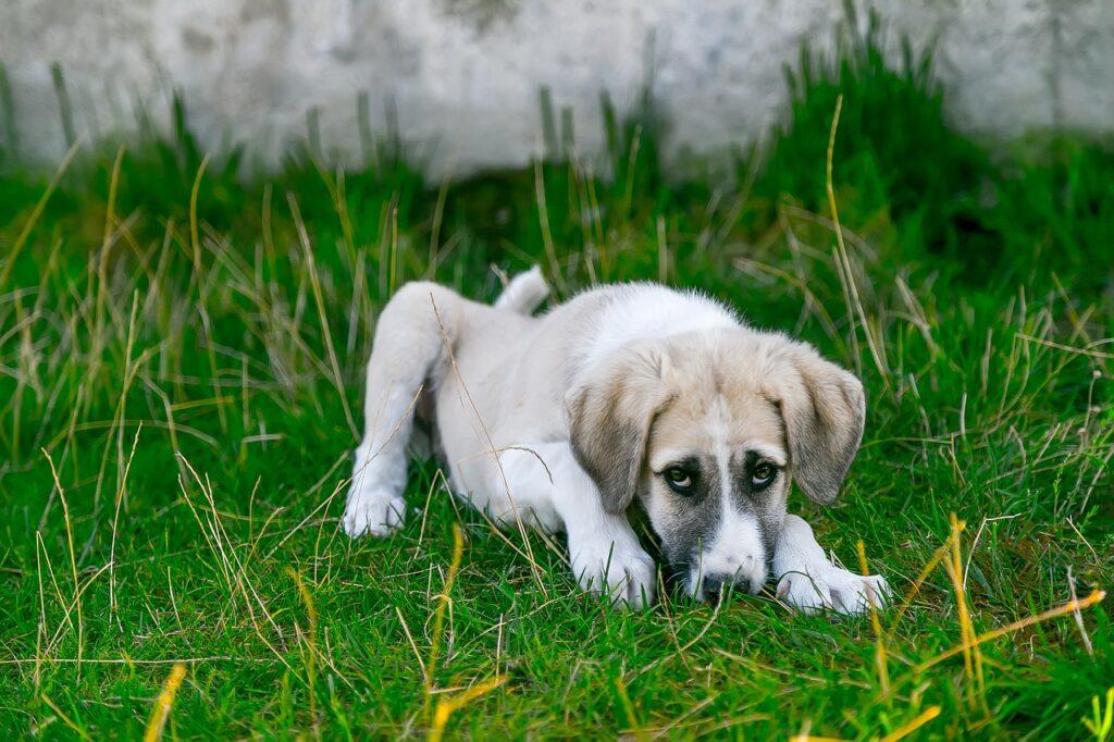infecção intestinal em cachorros