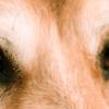 Olho amarelo em cachorros: o que pode significar?