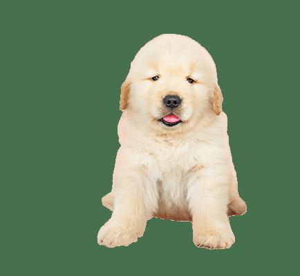 dog banner