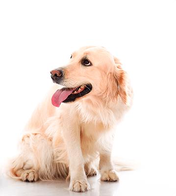 dog banner b