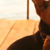 Carrapato em cachorro: como resolver o problema?