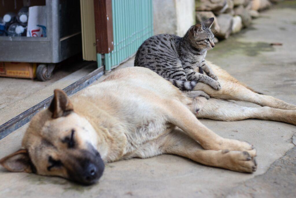 socializar cachorros e gatos