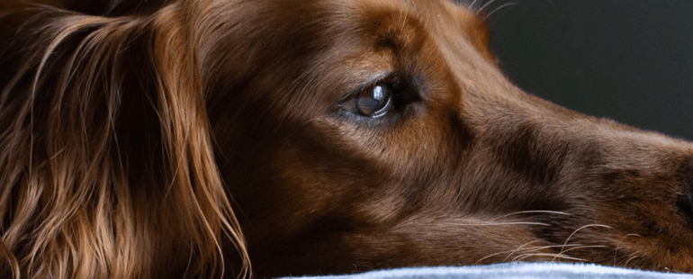 cachorro engasgado destaque