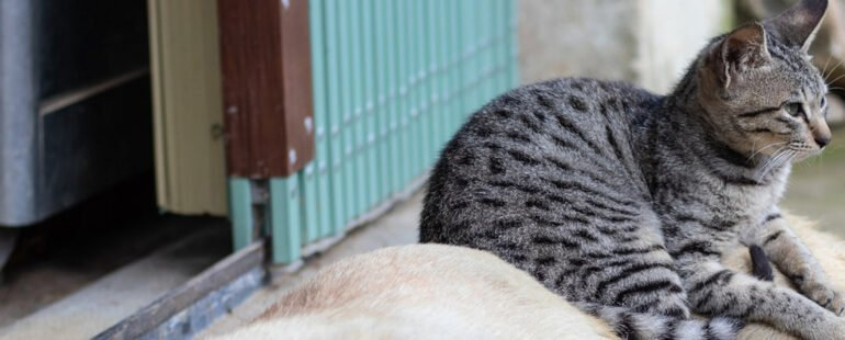 socializar cachorros e gatos destaque