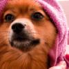 Banho em cachorro: qual a frequência ideal?