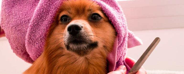 banho em cachorro destaque