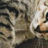 Catnip: a erva do gato. Saiba tudo sobre aqui!