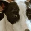 Raiva em cães e gatos: tudo sobre a doença
