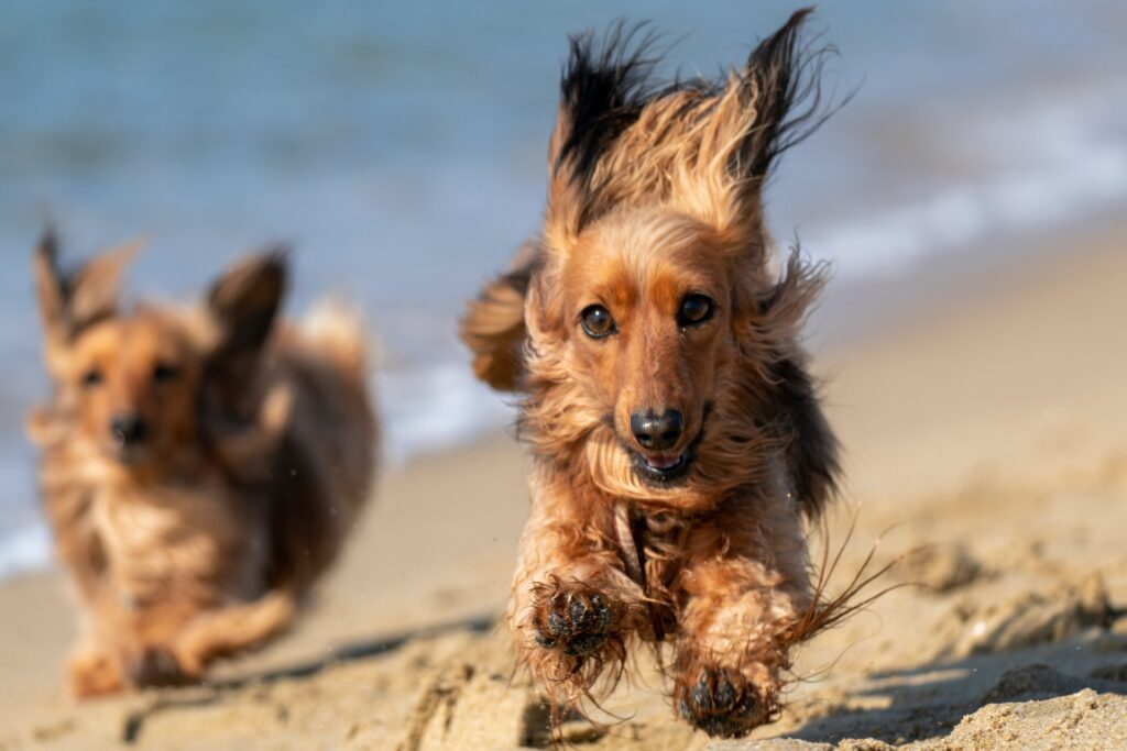 cachorro muito agitado