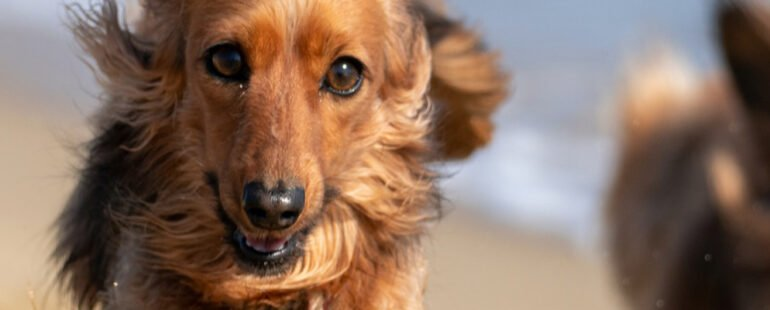 cachorro muito agitado destaque