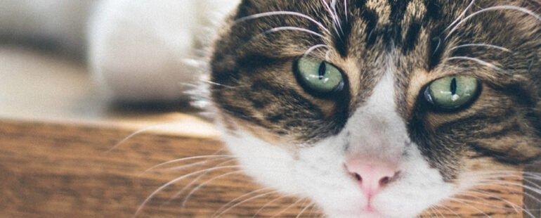 gatos idosos destaque