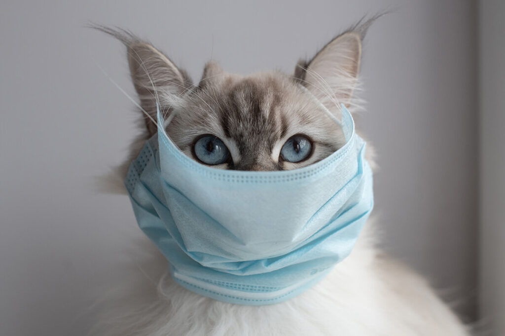 gato gripado