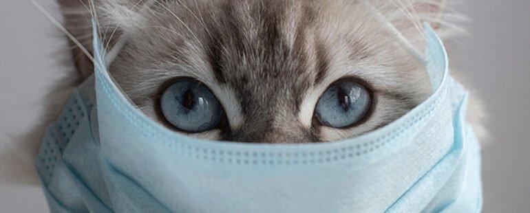 gato gripado destaque